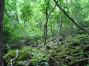 心の森林浴